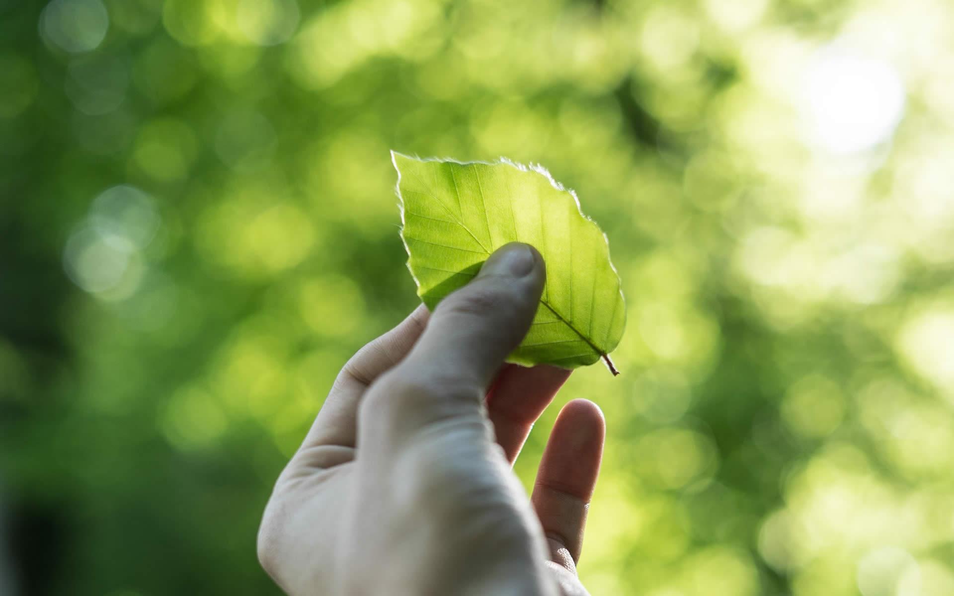 Patto per la sostenibilità tra Federdistribuzione ed ENEA