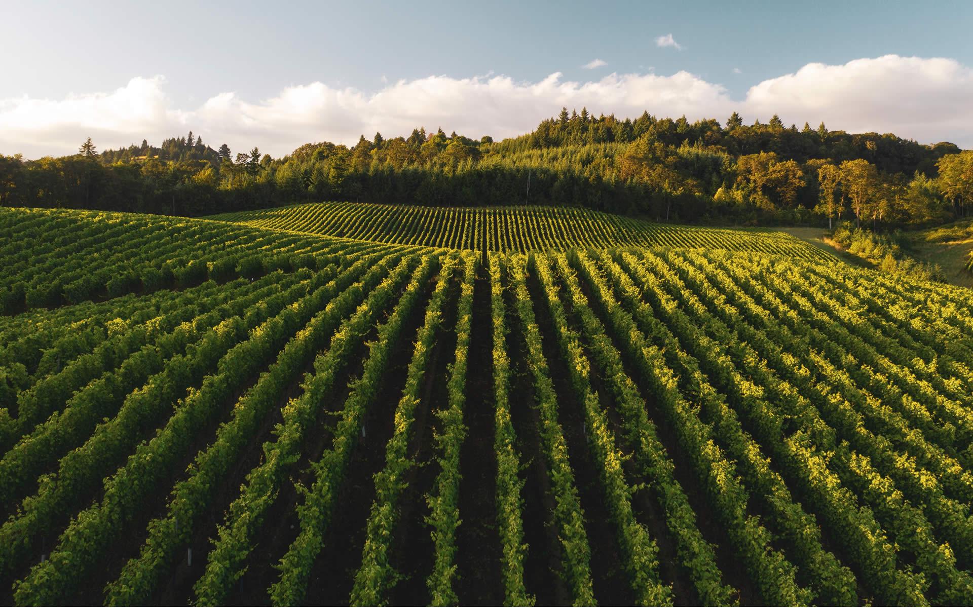 Green economy, economia circolare, agricoltura sostenibile: lo specchio dell'Italia che eccelle