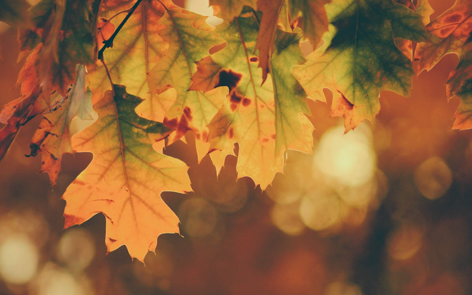 In autunno l'informazione sui RAEE è protagonista